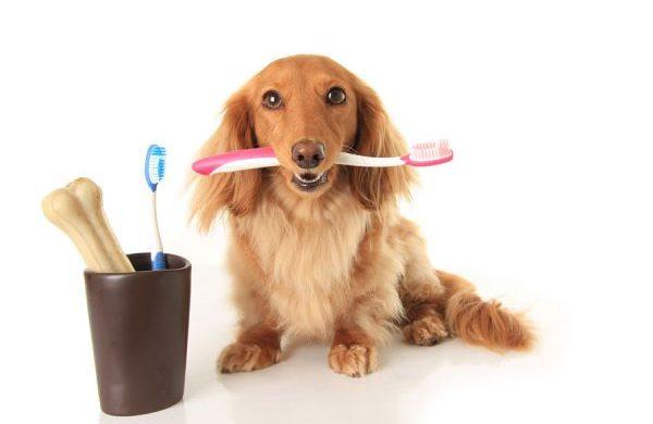 Cómo limpiar los dientes a un perro