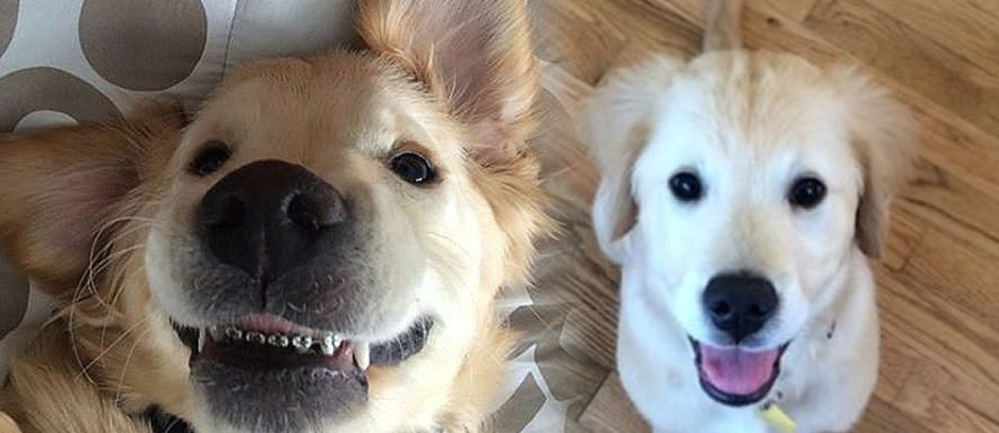 La ortodoncia para perros es poco conocida pero muy útil para solucionar problemas de salud dental